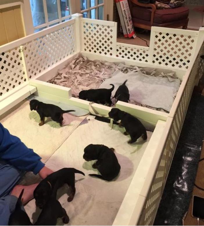 Вольер для мамы и щенков