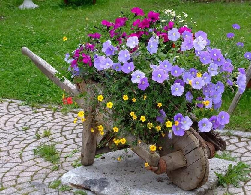 Старая тачка с цветами