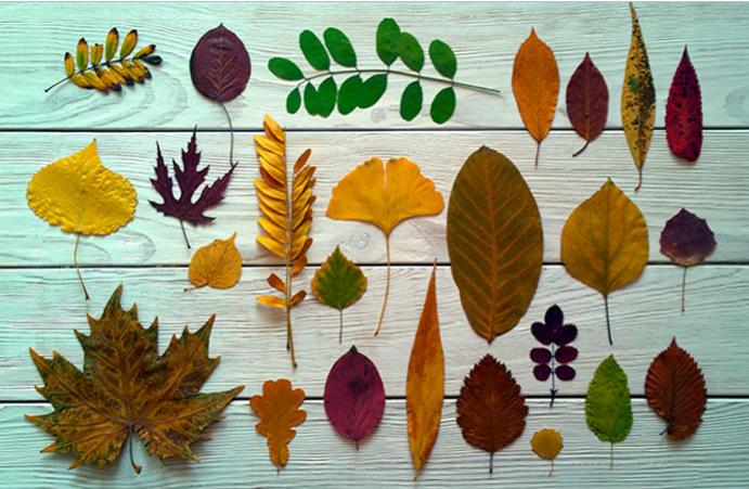 Варианты листьев