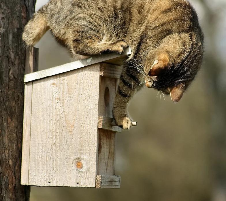 Защита от кошек