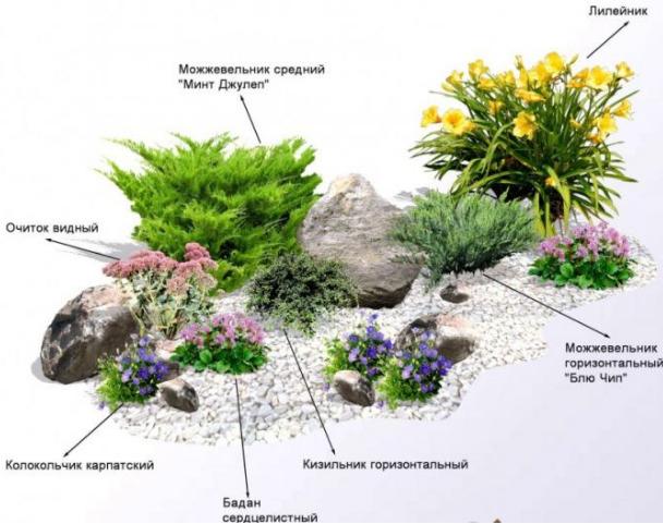 Схема расположения растений