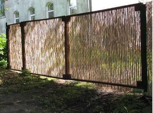 Камыш на заборе