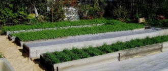 Зеленые грядки